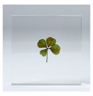 Clover in Transparent Square