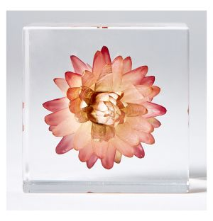 Strawflower Cube